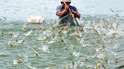 Hạ nhiệt cho tôm, cá mùa hè