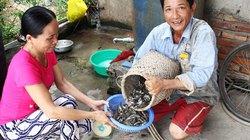 """""""Săn"""" cá còi xuất sang Trung Quốc"""