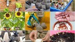 """""""Thiên biến vạn hóa"""" đồ vật quanh nhà để... gieo hạt, trồng cây"""