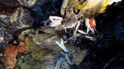 Tươi ngon hải sản vùng biển bãi ngang: Khen là thừa!