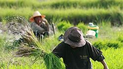 """Thái Lan """"bạo tay"""" cho nông dân vay… hơn 37.000 tỷ đồng"""