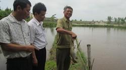 Vay vốn nuôi cá nước lợ, lãi 200 triệu đồng/ha