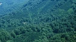 Đề xuất tăng phí dịch vụ môi trường rừng