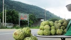 Độc đáo trái mãng cầu xứ núi Tịnh Biên
