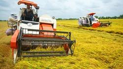 Hơn 90% nông dân làm lúa thu đông có lãi