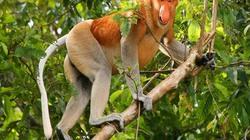 18 động vật kỳ dị sắp tuyệt chủng