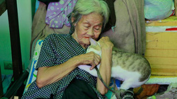 Cụ bà bán rau khắc khổ chỉ biết làm bạn với chó mèo