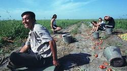Nông dân Trung Quốc bỏ việc để chơi chứng khoán