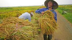 Mẹo bón phân để lúa tăng thêm 1 tấn/ha