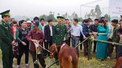 Nghệ An: Tặng 203 con bò giống cho hộ nghèo