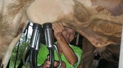 Cơ giới hóa nông nghiệp: Nhà nông khỏe, vật nuôi cũng khỏe