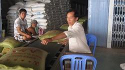 Xuất khẩu gạo khởi sắc nhờ giá... rẻ nhất thế giới ?