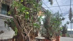 Chiêm ngưỡng vườn lan rừng tiền tỷ giữa Thủ đô