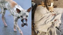 Cứu chó hay cứu người: Tình thương không chỉ dành cho người