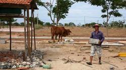 """Khánh Hòa: Dân không chịu tái định cư vào """"vùng đất chết"""""""