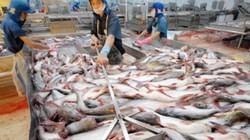 Cấp bách tái cấu trúc ngành cá tra