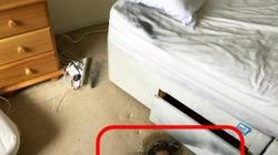 Pin dự phòng phát nổ khi đang sạc bằng MacBook