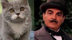 """Mèo khuynh đảo thế giới mạng nhờ """"chòm ria"""" giống người"""
