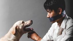 Quang Đăng bịt miệng, kêu gọi ngừng ngược đãi loài chó