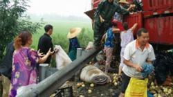 Dân Trung Quốc đổ xô đi hôi 20 tấn lê bị lật trên cao tốc