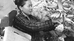 Người đưa cây đặc sản về vùng sơn cước