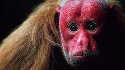 Giật mình trước 5 sinh vật có vẻ ngoài kỳ dị