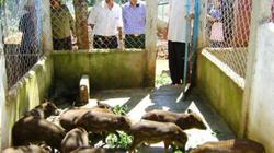 Đà Nẵng: Hơn 300 hội viên nông dân đua tài