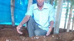 Tái sử dụng mùn cưa trồng nấm sò để trồng nấm rơm, tại sao không?