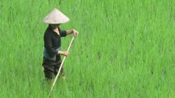 Nắng nóng chấm dứt tại Nam Trung Bộ