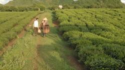 Thực trạng quản lý các nông, lâm trường: Thất thoát đất nghiêm trọng