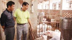 """""""Thăm"""" trang trại hữu cơ siêu sạch: Phải lội qua... dung dịch khử trùng"""