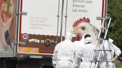Bắt 4 người vụ 71 thi thể bị nhồi trong xe tải ở Áo