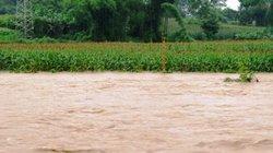 Bắc Bộ thiệt hại do mưa diện rộng