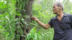 """Từ """"lâm tặc"""" trở thành chủ nhân cánh rừng gỗ quý tiền tỷ"""