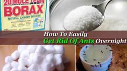 Cách chế 'thuốc' diệt kiến bằng nguyên liệu dễ kiếm