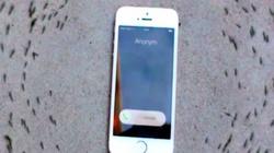 Tranh cãi với clip đàn kiến nghe nhạc chuông Iphone 6