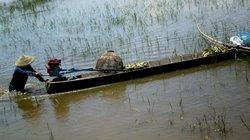 Thú vị mùa nước, đẩy côn săn cá đồng