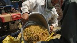 Thâm canh cây lúa và đa dạng hóa sản phẩm