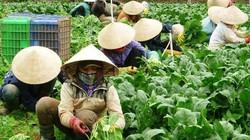 Nhu cầu tiêu dùng cao, rau củ Đà Lạt tăng giá