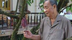 Thầy thuốc 83 tuổi và giấc mơ ca cao Việt