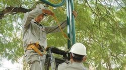 HN: Cắt điện hàng loạt để chặt cây, bảo dưỡng đường dây