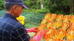 Thơm ngon khô cá lóc đồng đất Tam Nông