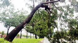 TPHCM: Gần 10 cây xanh bị quật ngã trên đại lộ triệu đô