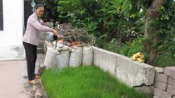 Giúp xã viên tăng giá trị trồng lúa 1,3 lần