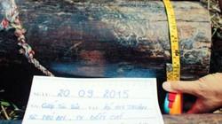 Trói cụ ông gần 90 tuổi, cướp... cột nhà