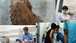 """""""Tiêm vắc-xin cho muỗi"""" để phòng bệnh sốt xuất huyết"""