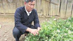 Dựa vào dân để phát triển rừng