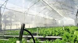 Người Sài thành chi 5 tỷ đồng để trồng rau hữu cơ giữa phố