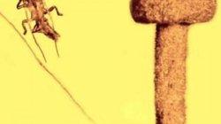 Phát hiện loài nấm 50 triệu năm tuổi