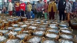 Cá xuất hiện mật độ dày: Ngư dân phấn khởi trúng mùa, được giá